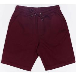 textil Herr Shorts / Bermudas Wrung Short  Shark rouge bordeaux