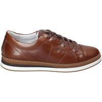 Skor Herr Sneakers IgI&CO 3138122 Brun