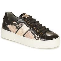 Skor Dam Sneakers NeroGiardini  Svart / Guldfärgad