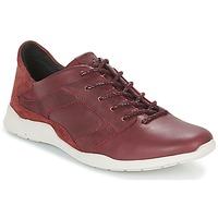 Skor Dam Sneakers TBS JARDINS Brun